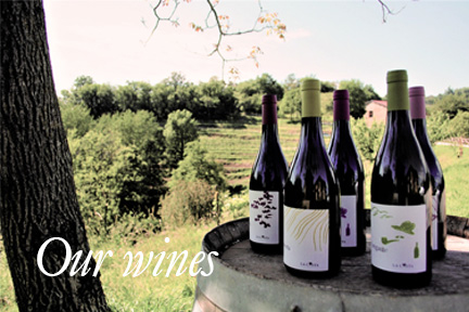 OUR WINES